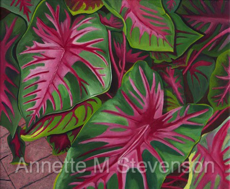 Caladiums, colorful, Annette M Stevenson