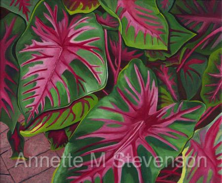 Caladiums, colorful, Annette M Stevenson