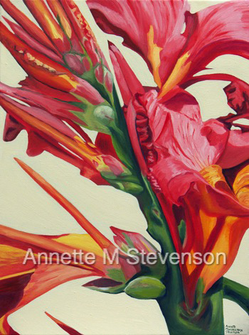 Canna Lily, tropical, AnnetteMStevenson,