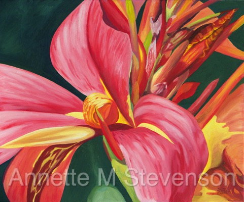 Canna Lily2, tropical, AnnetteMStevenson,